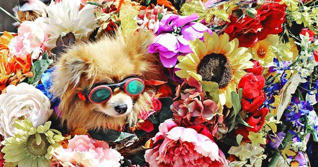 Cachorro e flores